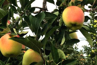 Frutas Lázaro
