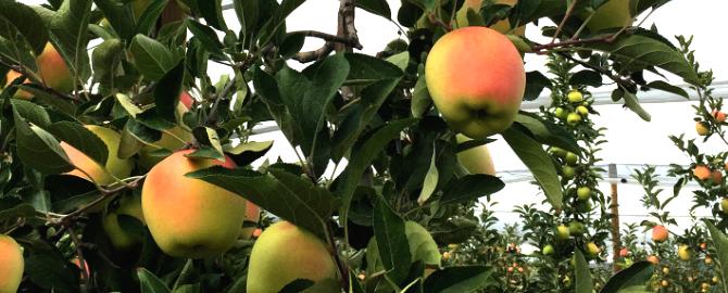 frutas lazaro cesens