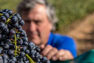 Del Medievo Winery