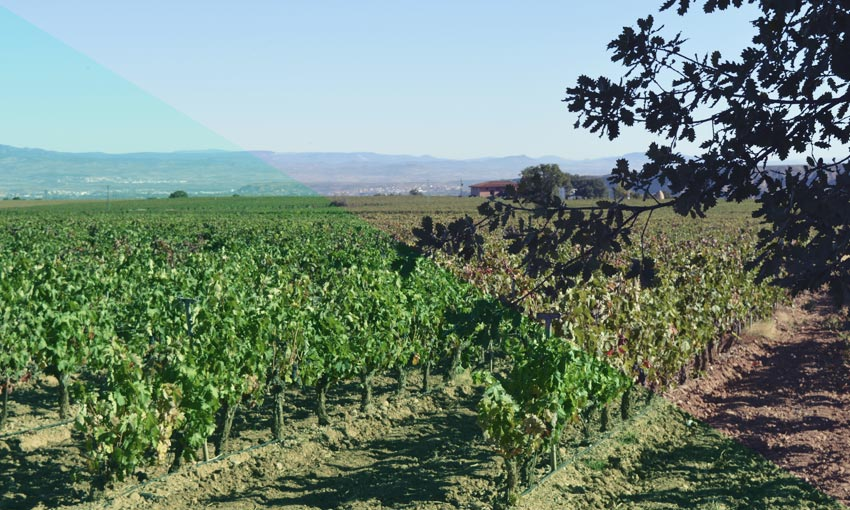 The present and future of Tempranillo have been analysed during a working day